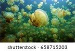 Jelyfish Lake  Palau Micronesia.