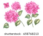 set of hydrangea flowers.... | Shutterstock . vector #658768213