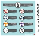 microscopic haematology .... | Shutterstock .eps vector #658780867