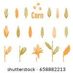 corn icons. vector illustration ... | Shutterstock .eps vector #658882213