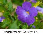 blooming flower background.... | Shutterstock . vector #658894177