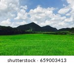 rice farm with hill and sky at... | Shutterstock . vector #659003413