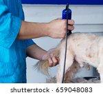 dog grooming. master shear... | Shutterstock . vector #659048083