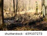 swamp   Shutterstock . vector #659107273