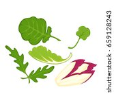 healthy organic salad leaves... | Shutterstock .eps vector #659128243