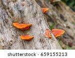 Orange Mushrooms Live And Grow...