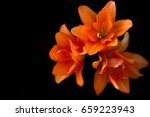Stock photo flowers on a black background flower closeup lily flower 659223943