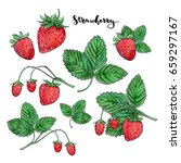 hand drawn painted set of... | Shutterstock . vector #659297167