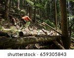 biker is riding downhill in the ... | Shutterstock . vector #659305843