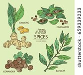 collection of hearbs  turmeric  ...   Shutterstock .eps vector #659339233
