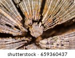close up macro detail image of... | Shutterstock . vector #659360437