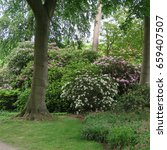 Small photo of In june in northern Germany on the coast in graal müritz in a park with many old rhododendron already almost bloomed