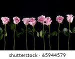 Row Of Pink Rose On  Black...
