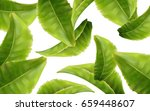green tea leaves  can be used... | Shutterstock .eps vector #659448607