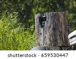 a hidden trail camera inside a... | Shutterstock . vector #659530447