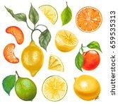 lemon orange mandarin... | Shutterstock . vector #659535313