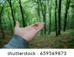 snail on hand in the forest. | Shutterstock . vector #659569873
