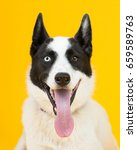 adorable rescue dog with two... | Shutterstock . vector #659589763