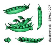 hand drawn sketch peas sketch... | Shutterstock .eps vector #659614207