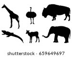 Wild Animals  Vector...