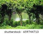 Tree Beside Pond