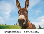picture of a funny donkey at... | Shutterstock . vector #659768557
