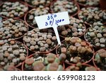 lthops plants for collections | Shutterstock . vector #659908123