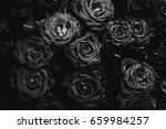bouquet of black and white roses | Shutterstock . vector #659984257