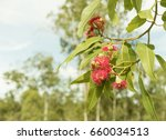 australian bush background with ... | Shutterstock . vector #660034513