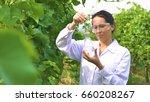a specialist girl checks the...   Shutterstock . vector #660208267