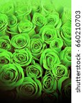 beautiful green roses for...   Shutterstock . vector #660210703