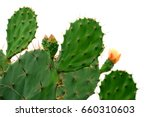 green pads on a prickly pear... | Shutterstock . vector #660310603