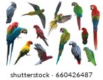 Big Set Of Parrot And Macaw...