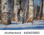 lynx   Shutterstock . vector #660603883