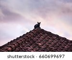 Silhouette Of Black Cat On The...