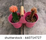 Small photo of Cactus with orange flower in pretty little small cute pot on wooden table.(dead and alive)