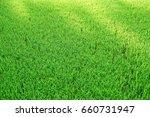field of green grass and...   Shutterstock . vector #660731947