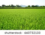 low angle view of fresh grass...   Shutterstock . vector #660732133