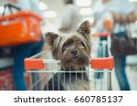 cute little puppy dog sitting... | Shutterstock . vector #660785137