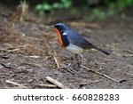 firethroat  migration bird ... | Shutterstock . vector #660828283
