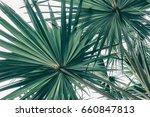 Tropical Foliage Texture...