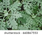 green small plant as a soothing ... | Shutterstock . vector #660867553