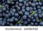 the image of bilberry on a... | Shutterstock . vector #66086968