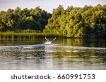 landscape with different birds... | Shutterstock . vector #660991753