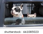 two french bulldog in car dogs... | Shutterstock . vector #661085023