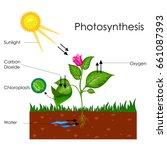 education chart of biology for... | Shutterstock .eps vector #661087393