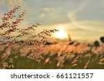 meadow grass flower orange tone ... | Shutterstock . vector #661121557