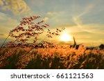 meadow grass flower orange tone ... | Shutterstock . vector #661121563