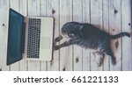 Stock photo lazy on work concept retro look cat near a laptop and office tools 661221133