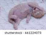 Stock photo small ginger cat kitten kitten sleeping domestic cat newborn kitten orange kitten one week old 661224073